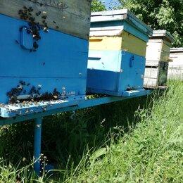Сельскохозяйственные животные и птицы - Пчёлы с ульями, пасека, улей, пчелопасека, 0