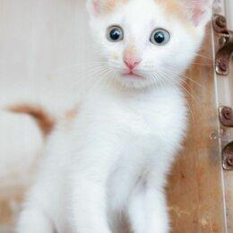Кошки - Брошенный у подъезда котенок Бананчик, 0