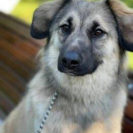 Собаки - Лея, девочка, метис, 0