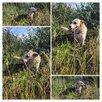 Красавица Ханна ищет самую любящую семью по цене даром - Собаки, фото 1
