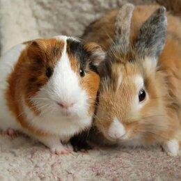 Услуги для животных - Передержка маленьких животных, 0