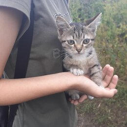 Кошки - Котенок Рыся, 0