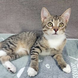 Кошки -  Ласковая девочка Джерри 4 мес ищет свой дом маму, 0