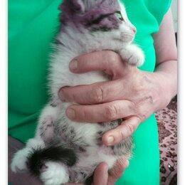 Кошки - Отдам котенка 2,5 месяца в добрые руки, 0