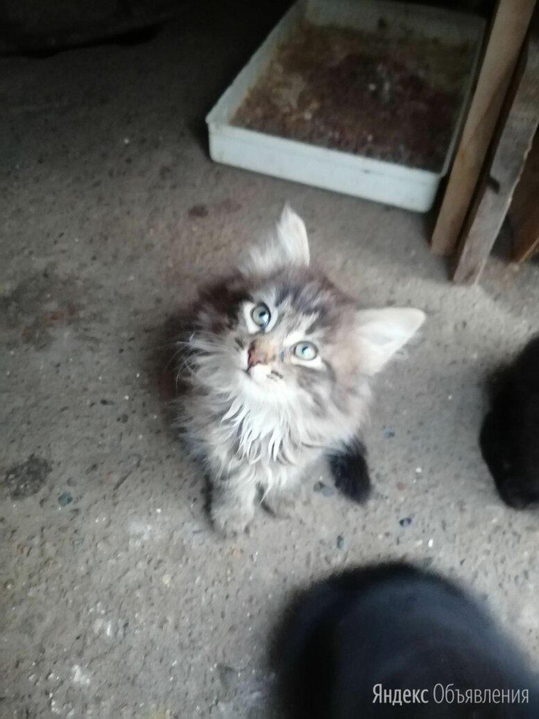 Котята в добрые руки  по цене даром - Кошки, фото 0