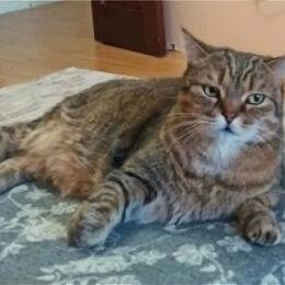 Животные - Потерялся кот Стёпа. Видевших, нашедших просим, сообщить., 0
