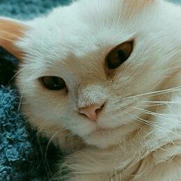 Кошки - Белая ангорская кошка, 0