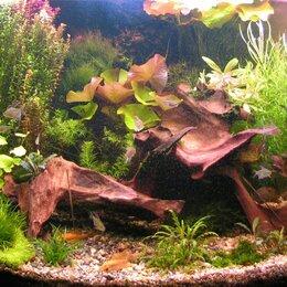 Растения для аквариумов и террариумов - Аквариумные растения в СВАО Москва, 0