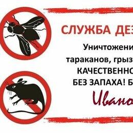 Бытовые услуги - Уничтожение клопов тараканов грызунов, 0