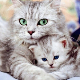Прочие комплектующие - Заботливая мама Артикул : GX 36536, 0