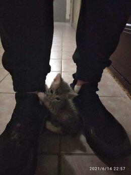 Кошки - Котят подкинули, отдаю в добрые руки..., 0