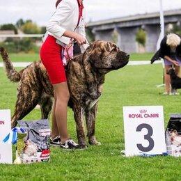 Услуги для животных - Хендлинг, показ и подготовка выставкам,  Дрессировка собак , 0