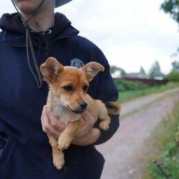 Собаки -  Очаровательные крошки, мини собачки, 0