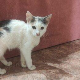 Животные - Белая кошка, 0