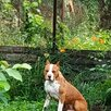 найдена собака по цене не указана - Животные, фото 0