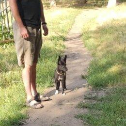 Собаки - Щенок, 4 месяца, будет некрупной , 0