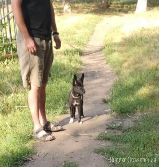 Щенок, 4 месяца, будет некрупной  по цене 1₽ - Собаки, фото 0