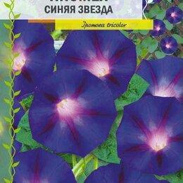 Рассада, саженцы, кустарники, деревья - Ипомея Синяя Звезда (Семена Алтая), 0