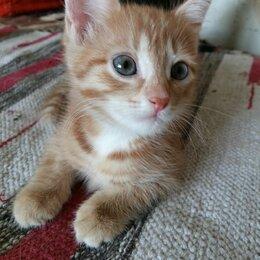 Кошки - Кошечка 2,5 мес. Миленькая девочка, 0