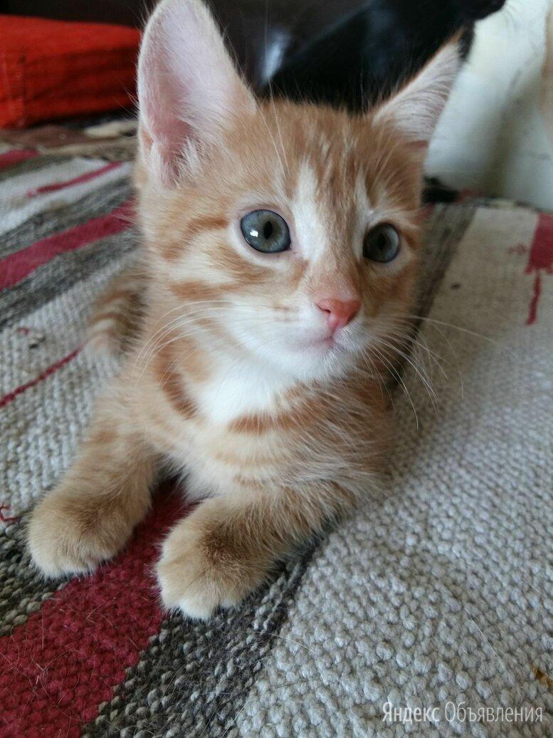 Котик 2 мес. и Кошечка 3,5 мес. Миленькая девочка по цене даром - Кошки, фото 0