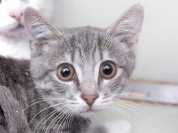 Кошки - Котенок Арно ищет дом, 0