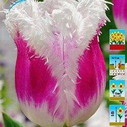 Луковичные растения - Тюльпан бахромчатый  Гавайи 8 шт, 0