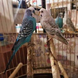 Птицы - Попугаи  волнистые с клеткой , 0