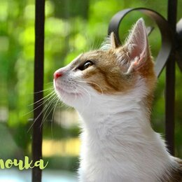 Кошки - Два ласковых вкусных котёнка Булочка Кексик 3 мес, 0
