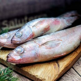 Аквариумные рыбки - Рыба Красноглазка, 0