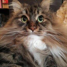 Животные - Потерян кот г. Ивантеевка, в районе ул. Вокзальная, д.2. , 0