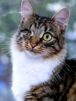 Кошки - Кошка-королева Агата в добрые руки, 0