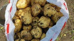 Продукты - Картофель, 0