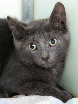 Кошки - Эмджи, умничка и просто красивый котёнок, 0