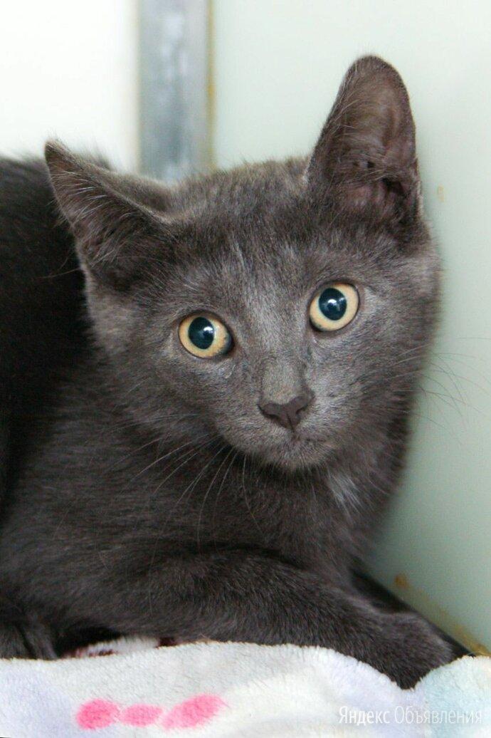 Эмджи, умничка и просто красивый котёнок по цене даром - Кошки, фото 0