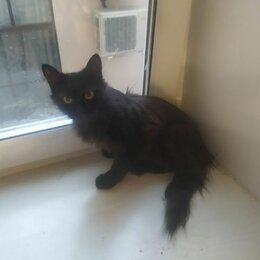Кошки - Чёрная кошка, 0