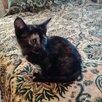 """""""Подарки от дачников""""-выброшенные котята... по цене даром - Кошки, фото 2"""