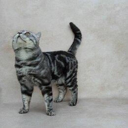 Услуги для животных - Вязка кот страйт., 0
