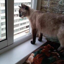 Кошки - Кошка , 0