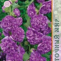 Рассада, саженцы, кустарники, деревья - Шток роза Чатер Темно-фиолетовая (Агрос), 0