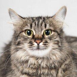 Кошки - Раечка - кошка, не терпящая одиночества в добрые…, 0