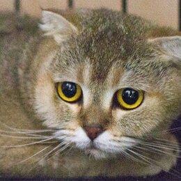 Кошки - Огромные грустные глаза... кошка Китюпа ждёт вас!, 0
