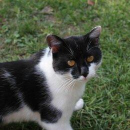 Кошки - Котик с янтарными глазками ищет дом, 0