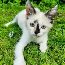 Кошки - Крошка-кошечка Ляля ждет своих папу-маму, 0