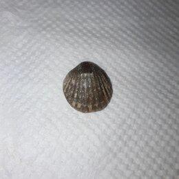 Другое - Древняя окаменелость ~ 500 миллионов лет, 0