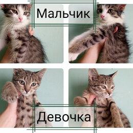 Кошки - Брат и сестра в поисках дома! , 0