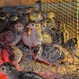 Птицы - Маленькие фазанята, 0