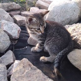 Кошки - Котята ловчих пород, 0