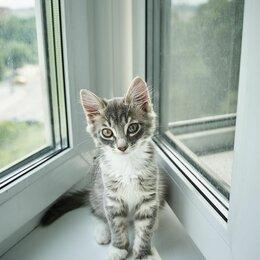 Кошки - Котёнок Лео ищет дом, 0
