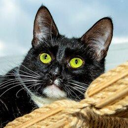 Кошки - Генриетта - кошка во фраке с игривой душой в дар…, 0