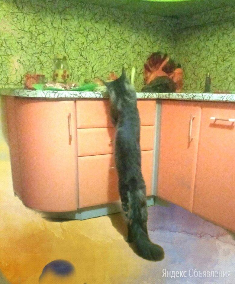 Котята  по цене 45000₽ - Кошки, фото 0